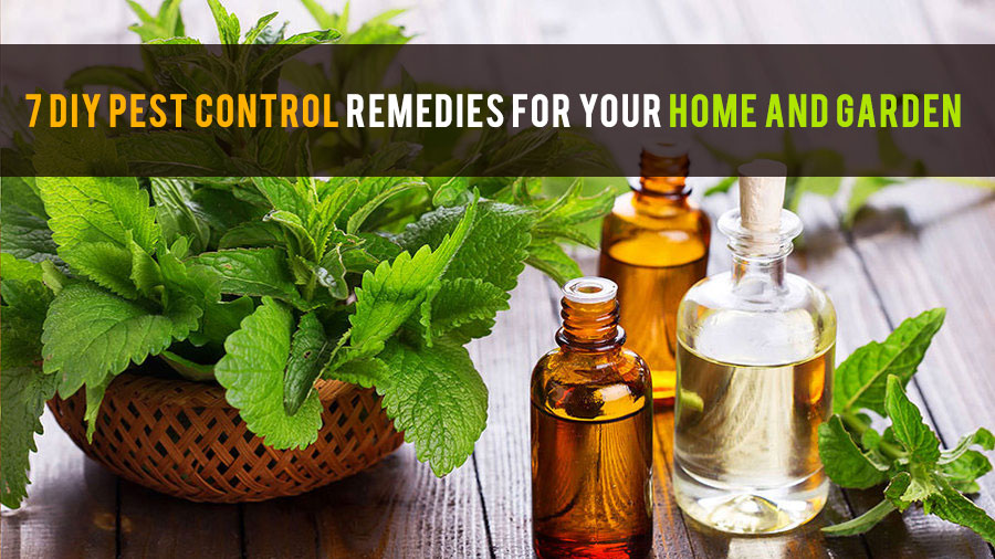 7 Diy Pest Control Remedies For Your Home And Garden - Life And Taste